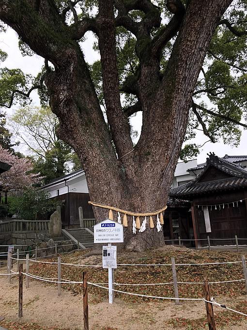 艮神社のクスノキ(尾道市)うしとらじんじゃ