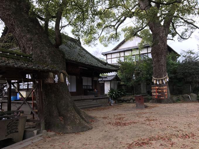 御袖天満宮の御神木(尾道市)