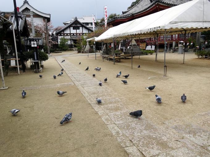 浄土寺の御朱印(尾道市)